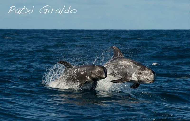 WHALE AND DOLPHIN WATCHING, AND THE MARINE LIFE OF LANZAROTE